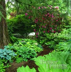 shade garden--does that look like rhubarb in the foreground under the title?