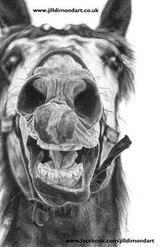 """""""Smiler"""" graphite horse portrait by Jill Dimond. Fine art prints & canvas wall art available! #horse #pencildrawing #realism"""