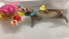 10 Best FERRET GAMES (A Complete Guide) - Ferret Voice