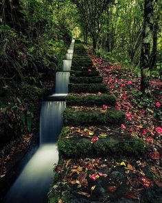 Stairway to heaven 📍Ribeiro Frio Forest Park, Portugal . Beautiful Islands, Beautiful World, Beautiful Places, Landscape Architecture, Landscape Design, Garden Design, Ponds Backyard, Backyard Landscaping, Landscaping Ideas