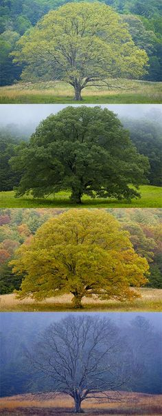 A tree in four seasons