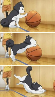 hund können auch Basketball spielen