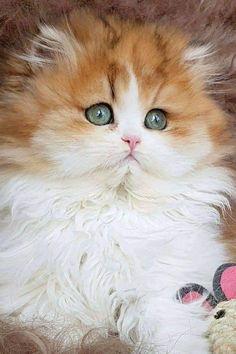 900 Ideas De Preciosos Gatos Y Gatitos En 2021 Gatos Gatos Bonitos Gatitos Lindos