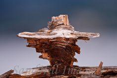 Driftwood Scupture on Ediz Hook, Washington