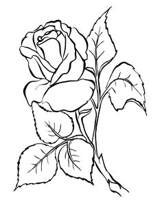 sfatulparintilor.ro, planse de colorat, trandafirul