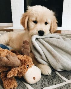 Everything we all like about the Intelligent Golden Retriever Puppies . - Everything we all know about the Intelligent Golden Retriever Puppies to like … - Super Cute Puppies, Cute Little Puppies, Cute Dogs And Puppies, Cute Little Animals, Cute Funny Animals, Baby Dogs, Doggies, Puppies Puppies, Pet Dogs