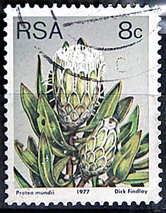 Issued of May R S A Protea mundii. Cactus, Rare Stamps, Postage Stamp Art, Flower Stamp, African Animals, My Childhood Memories, African History, Stamp Collecting, Trees To Plant