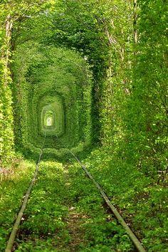 ウクライナにある緑のトンネル「the Tunnel of Love」(画像) - 涙目で仕事しないSE