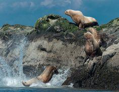 Mayne Island, Gulf Islands, BC.