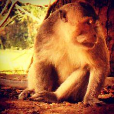 """This handsome stranger was very interested in my photography efforts when I was visiting Bali! What a good looking guy! ✈️ #bali #travel #_natgeo_  #smartertravel #travelblogger #lifestyle #trip #backpacker #travelphotography  #wonderlust #viajero #viajem #worldingram #passionpassport #insta_international #photo #photographer #worldcaptures #lifeofadventure #darlingescapes  #expediapic #officialtravelpage #travelawesome #bestvacations #global_hotshotz #wonderful_places #natureaddict…"