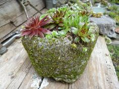 Pinch pots are one of the easiest and fun ways to get started building hypertufa pots - it's hard to go wrong with these...