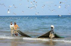 Theo kết quả của một nghiên cứu quốc tế mới về các tác động của các hệ thống lưới kéo khác nhau, các cộng đồng sinh vật đáy có thể mất hơn 6 năm để khôi phục lại thiệt hại từ một lần thả lưới của một...