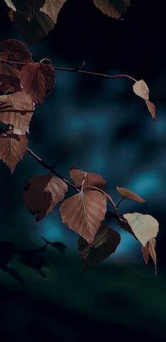 iOS 11, iPhone X, dark, blue, leaves, Autumn, apple, wallpaper, iphone 8, clean, beauty, colour, iOS, minimal
