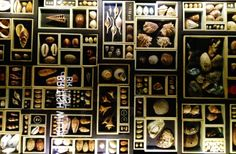 shell display at Manchester museum
