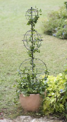 The perfect start to an elegant topiary. Substantial size creates a dramatic statement. Ideal for containers or in-ground display. Diy Trellis, Garden Trellis, Plant Trellis, Trellis Ideas, Topiary Garden, Garden Pots, Topiary Plants, Garden Ideas, Container Plants