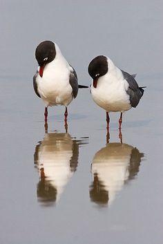 Seagull Reflections.   My Fotolog
