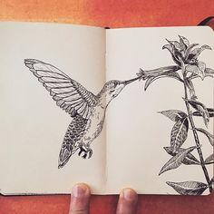 Journal sketch No.20 Hummingbird. Video coming soon, what's your favorite wild animal?  #sketch #art #hummingbird #drawing #draw #nature #ink #illustration #flowers #journal #plants #blackandwhite #sketch_daily #arts_help #art_sanity #artfido #arts_gallery #artwork #art_spotlight #nawden #artofdrawingg #sketch_daily #proartists #art_worldly #art_realisme #artistic_share #art_empire #worldofpencils #artistic_nation #artfido