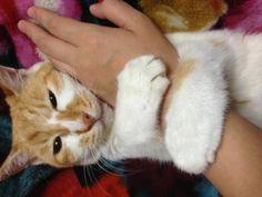 16歳のおじいちゃん^_^ もっともっと長生きしてね☆ 16-year-old grandpa. Live long enough to have more and more.  #cat  #ねこ