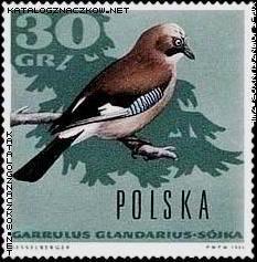 znaczki pocztowe ptaki-  sójka