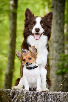 Brother and sister ! #cute #dogs #animal #pet Yummypets.com