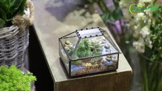 geometric  terrariums Terrarium Containers, Glass Terrarium, Terrariums, Terrarium Ideas, Small Potted Plants, Air Plants, Ceramic Planters, Floating Frame, Classic Elegance