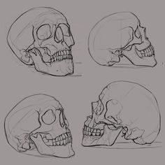 some skull sketches. Reference images from