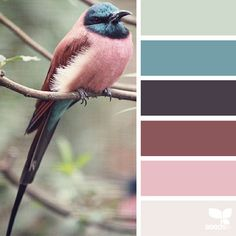Nature-Inspired Color Palettes AKA Design Seeds For Designers,... ❤ liked on Polyvore featuring design seeds, colors, backgrounds, palettes, color palettes and filler