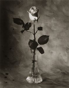 rose in a vase - Google Search