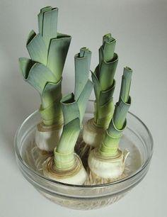Ne jetez plus vos restes de légumes et de fines herbes, ils ont le droit à une seconde vie ! Faire pousser des légumes à partir des restes, c'est possible. Voici la liste des légumes à cultiver chez soi à l'infini. 1. La laitue (photo ci-dessus)