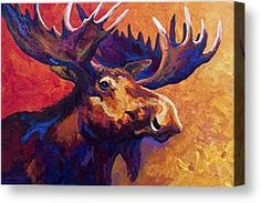 Moose Canvas Prints - Noble Pause Canvas Print by Marion Rose