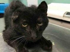 Please watch ALL Super Urgent Shelter Cats ! Super Urgent Cats