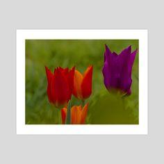 #INPRNT #illustration #print #poster #art Print Poster, Tulips, Art Prints, Printed, Gallery, Rose, Paper, Garden, Illustration