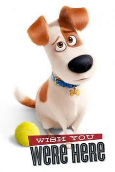 The Secret Life of Pets Wish You Were Here Maxi Poster