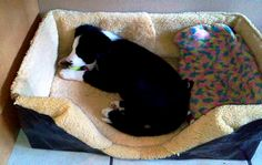 From sheep's skin jacket to cosy puppy bed
