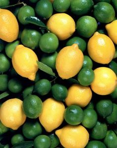 Okay, it's fruit. Anyway - how to grow citrus hydroponically...