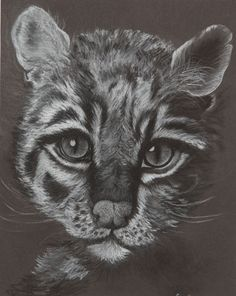 a drawing of a black and white cat on black paper, charcoal pencils 11x14""