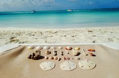 Seashells collected snorkeling in front of The Alexandra Resort - Grace Bay February 2014  #alexandradream and #caribbean  Turks and Caicos, Provo