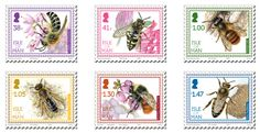 Dragonflies, Butterflies, Other Insects, Honeybees, Bumblebees   Bird decline, insect decline and neonicotinoids