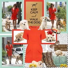 """""Keep Calm & Walk The Dog."" ~ Eva Mendes Style"" by shazgoldcoast ❤ liked on Polyvore"