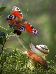 Super Butterfly and