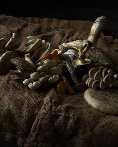 mushrooms - photographer Andrea Gentl