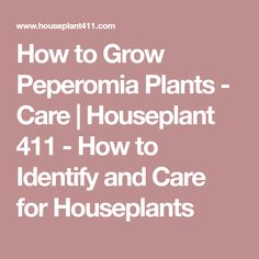 How to Grow Peperomia Plants - Care | Houseplant 411 - How to Identify and Care for Houseplants