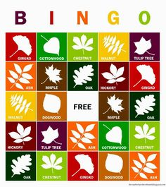 Count us in for a game of leaf bingo this fall! Explore leaf structure and identification with this fun activity. Share with Bullington garden staff. Autumn Activities For Kids, Nature Activities, Science Activities, Montessori Activities, Toddler Activities, Science Fun, Autumn Crafts, Nature Crafts, Christmas Crafts