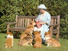 corgi queen~the queen mum Elizabeth Ii, Corgi Husky, Husky Mix, Reine Victoria, Queen Mother, Queen Mary, Isabel Ii, Her Majesty The Queen, Pembroke Welsh Corgi