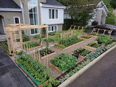 best-small-vegetable-garden-ideas-39.jpg 1,080×810 pixels