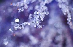 10.12.2010 071 by she-wolf (Edira), via Flickr