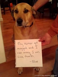 Okay this is funny! Made me lol! I could see Boo doing this, after she viciously barked and growled