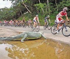 Tour of Costa Rica 2011