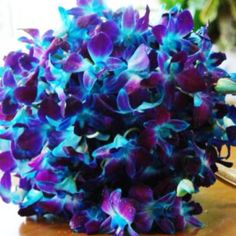 Blue Bombay dendrobium orchid. <3 these!