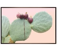 "Ripe Prickly Pear Framed Print by Jane Wilder, 42 x 28"", Wood Gallery Frame, Espresso, Mat"